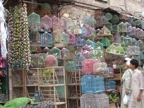 peshawar005