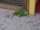 Parrot - Baños
