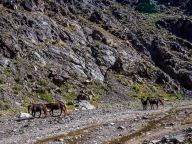 Petroglyphs - Horses along the river
