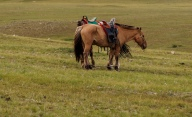 Mongolia Redux – The Horse Trek