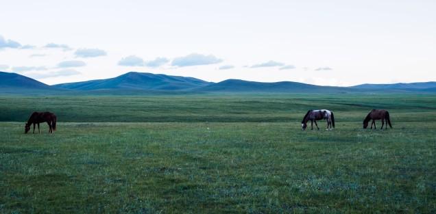 Horse Trek