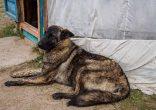 Ger Dog - Ogii Nuur