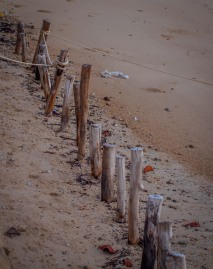 Beach wood, Koh Phayam, Thailand