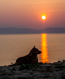 Dog at sunrise - Koh Phayam, Thailand