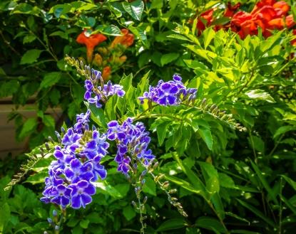 Matsuyama Flowers