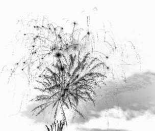 Fireflowers - 2017