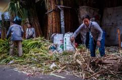 Sugar Cane - Phnom Penh